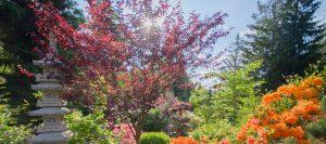 kolorowa roślinność w ogrodzie japońskim siruwia