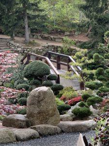roślinność w ogrodzie japońskim
