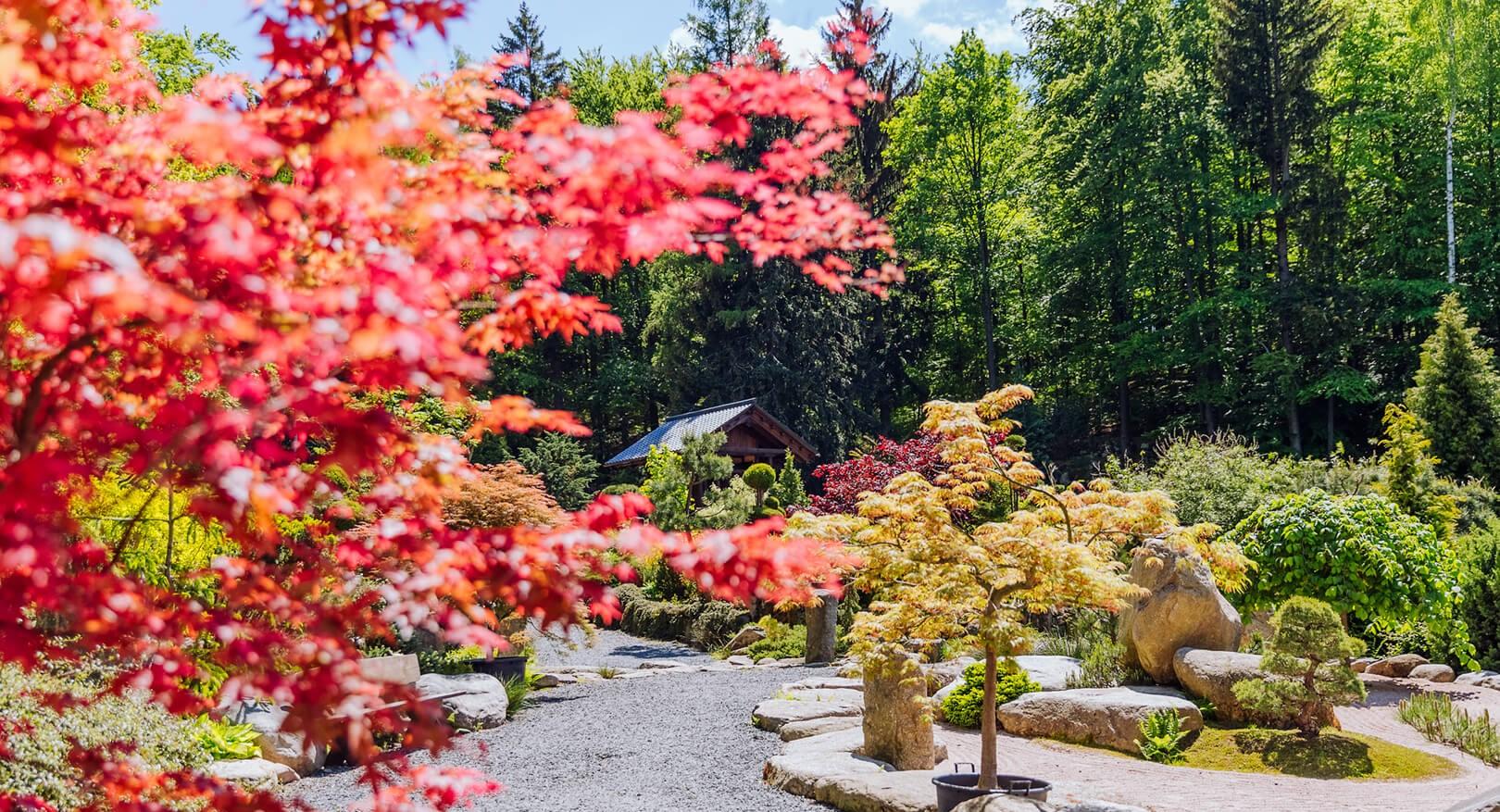 ogród japoński siruwia