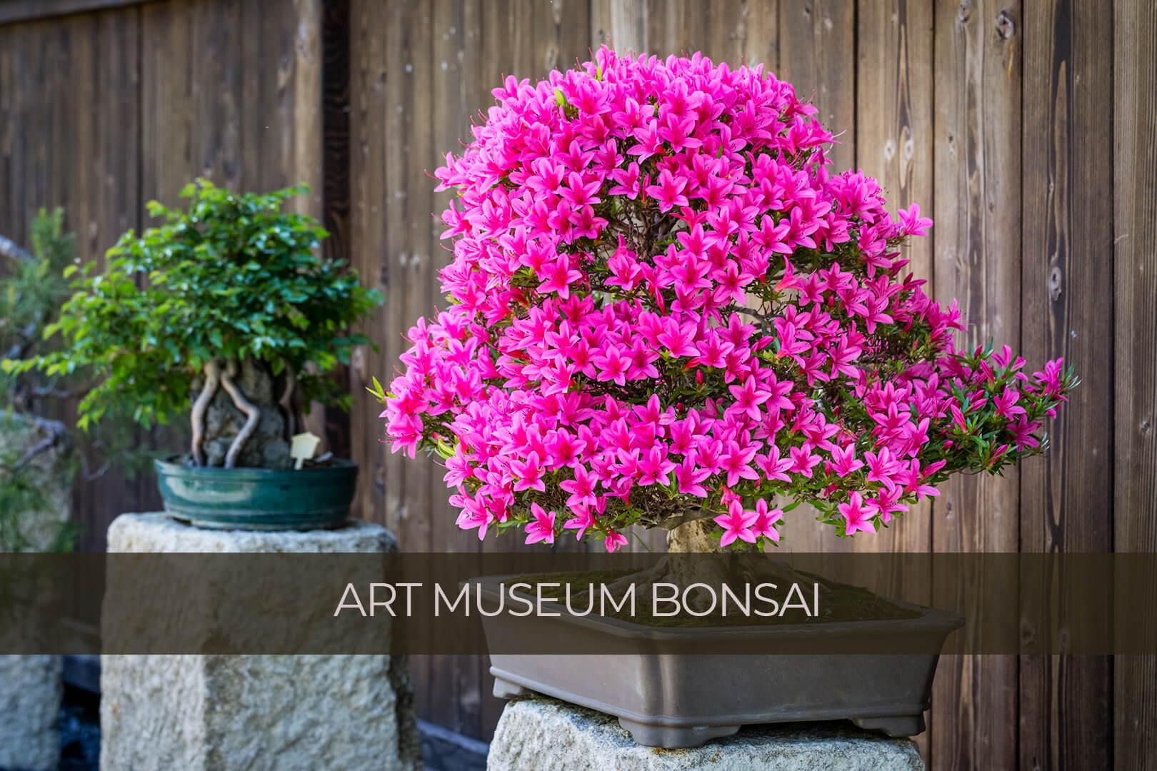 bonsai poprawione