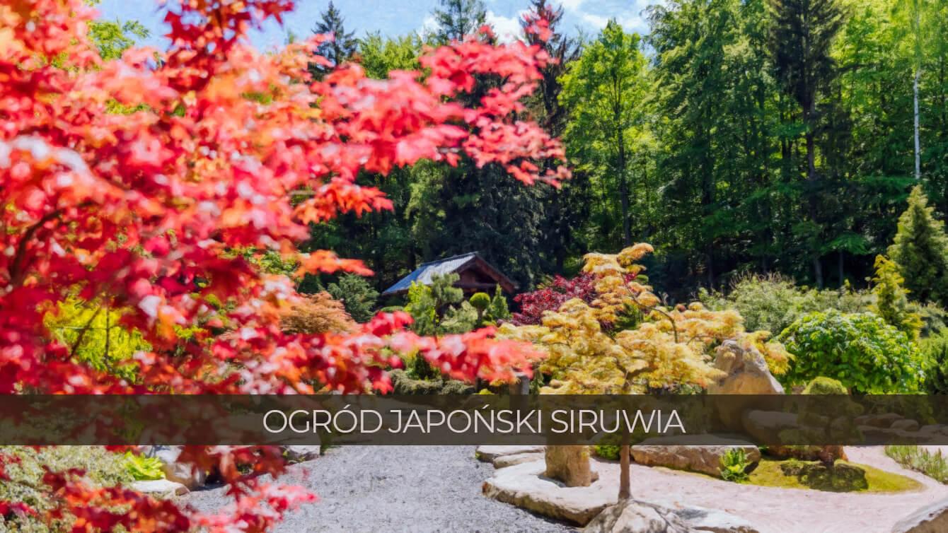 ogrod japonski siruwia poprawione